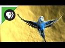 Amazing Parakeet Facts