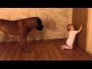 Бурбуль и ребенок 3. Boerboel and baby