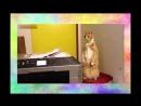 Кот испугался видео прикол. СМЕШНО ДО СЛЕЗ Видео приколы про кошек 2016