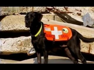 Введение в собаковедение 101 Dogs 1 серия