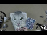 Snow Leopard Mask Airbrushing Timelapse (4x speed)