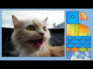 Top 10 cutest baby kittens doing funny things compilation video