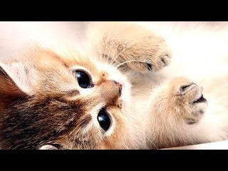 Top 10 cutest baby kittens doing funny things video 770
