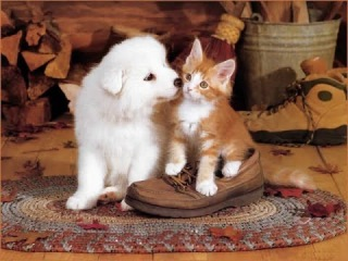 Top 10 cutest baby kittens doing funny things video 664