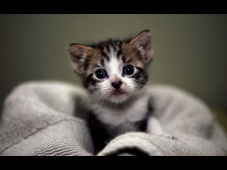Top 10 cutest baby kittens doing funny things video 788