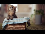Top 10 cutest baby kittens doing funny things video compilation 785