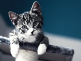 Top 10 cutest baby kittens doing funny things video 678
