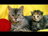 Top 10 cutest baby kittens doing funny things video 778