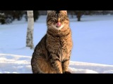 Top 10 cutest baby kittens doing funny things video 733