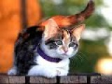 Top 10 cutest baby kittens doing funny things video