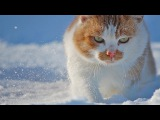 Top 10 cutest baby kittens doing funny things video 786