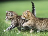 Top 10 cutest baby kittens doing funny things in video compilation