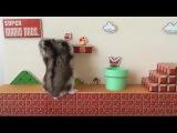 Supermario Hamster