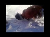 В Каркаралинске сняли, как коровы исчезают в норе под снегом