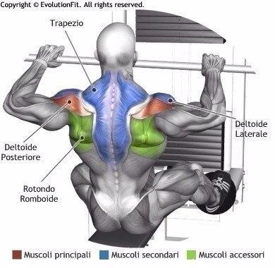 Хотите построить мощную и широкую спину?