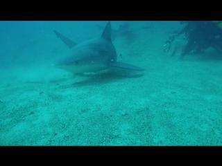 Кормление бычьих акул, Куба, Санта Лючия