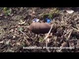 Котельники. Инфо. Неразорвавшийся снаряд обнаружен в г.о. Люберцы