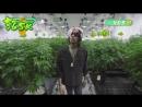 Happy 420. Download Wiz Khalifa's Weed Farm now!