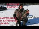 Карелия весной Мормышка и трофейный окунь Lifefishing