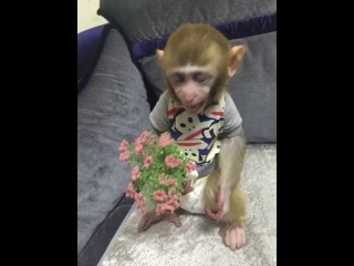 Killing me, this child is very despise this flower, wish you a happy Valentine's day established