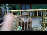 Memberi makan otter regul linsang berang-berang