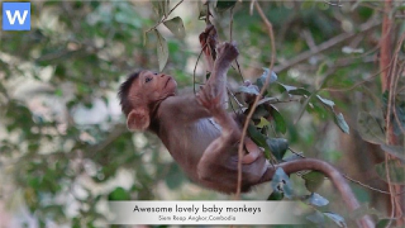 Awesome lovely baby monkeys - Baby monkeys happily playing on the trees - Amazing animals