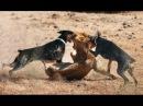 Best Trained Disciplined Doberman Dogs