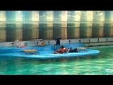 дельфинарий на крестовском 1