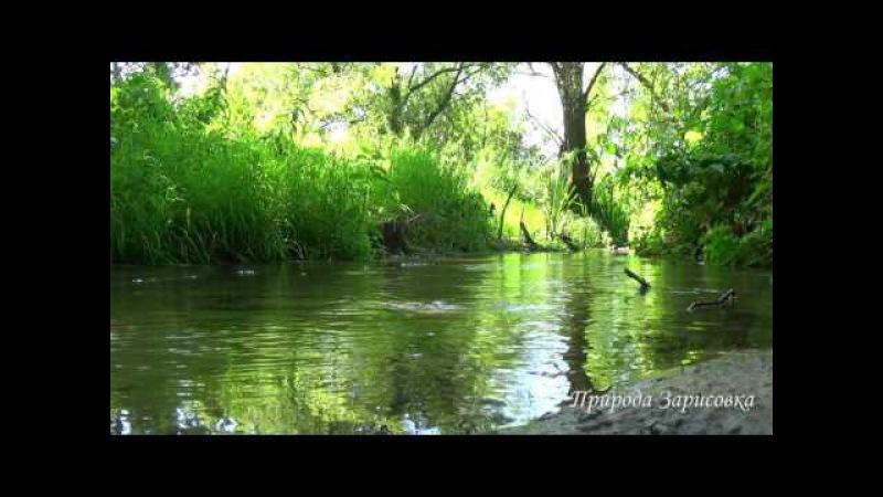 Ручей в лесу. Природа. Пение птиц. Звуки ручья. Слушать. Релакс. Медитация. Звуки п...