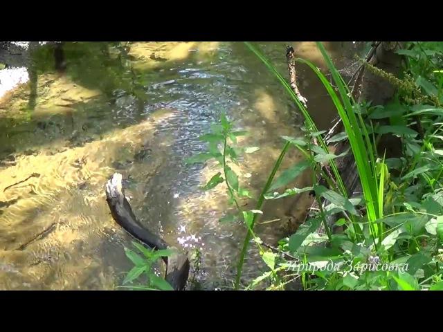 Лесной ручей. Природа. Пение птиц. Журчание воды. Журчание ручья. Родник. Источник. Релакс.