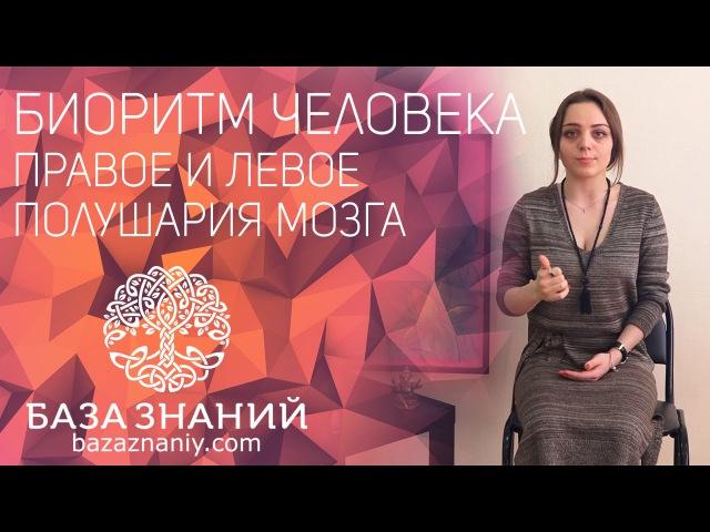 БИОРИТМЫ ЧЕЛОВЕКА - Правое и левое полушарие мозга (Дарья Абахтимова) » Freewka.com - Смотреть онлайн в хорощем качестве