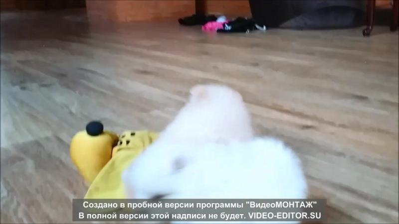 Кремушек-Мишка Гами)