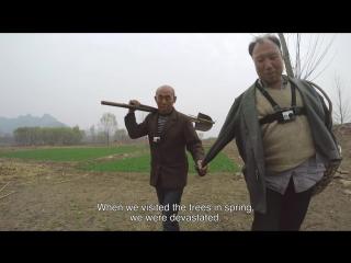 A blind man and his armless friend plant a forest in china. (слепой человек и его безрукий товарищ сажают лес)