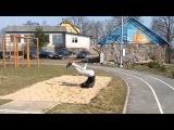 Best Funny Video april 2016