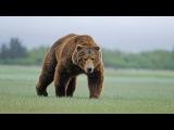 Сибирь - Дикая природа России. Самый крупный в мире баран. Самая редкая птица. Вол...