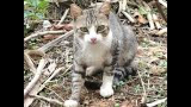 Animal kingdom: kem ke' kafune'? fofuras felinas gatinhos fofos
