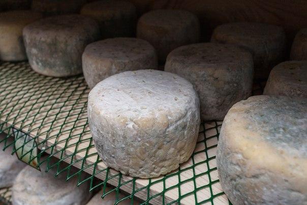 Сыр и плесень