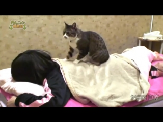 В японском спа работает кот-массажист
