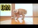 🔴 Lustige Katzen Tiere Zum Totlachen 54 BM