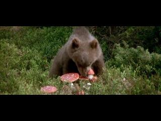 Защитники. Bear trip.
