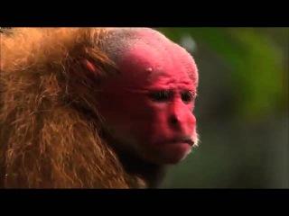 Мифы амазонки 2 Документальные фильмы National Geographic HD5341