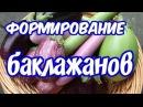 Как формировать баклажаны секрет большого урожая как получить плоды 900 1000гр
