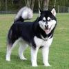 Собаки в Краснодаре / Типичный собачник