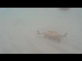 Краб танцует лезгинку. Crab dancing lezginka (sj 4000)