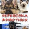 Перевозка домашних животных. Animals Travel