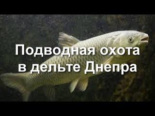 Подводная охота в дельте Днепра.
