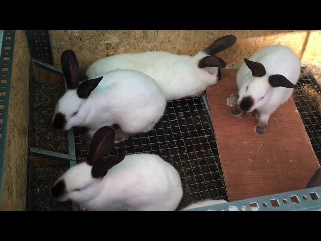 Почему мы отказались от содержания кроликов в вольере....? Новая клетка