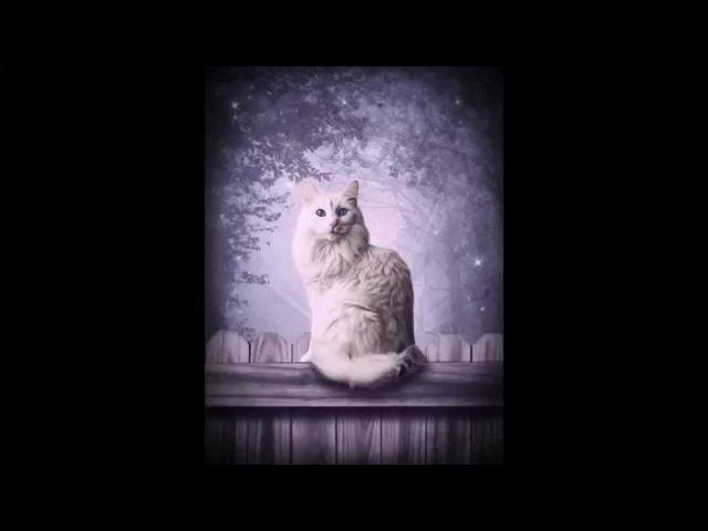 Мельница - Белая кошка