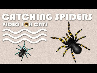 CAT GAMES - Catching Spiders! Entertainment Video for Cats to Watch.