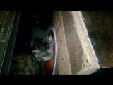 Кошак в порті)